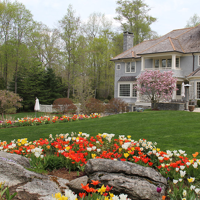 The LaurelRock Company provides year-round property enhancements such as Spring tulips..